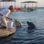 Eilat Dolphin Reef Ann Goldberg