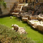 Jerusalem Zoo Ann Goldberg